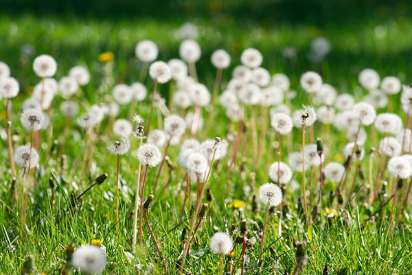 Allergiediagnostik-Therapie